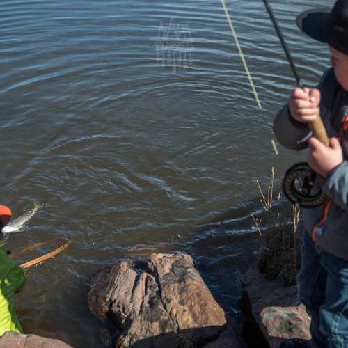 kids-netting-fish